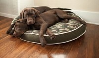RV-pet-tips-dog-bed.jpg