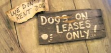 Pet Etiquette Tips for RV'ing at Campgrounds and RV Parks