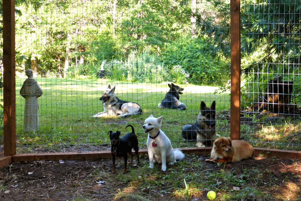 dogs relaxing at a dog vacay owners house