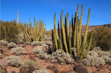 3 National Monuments of the Southwest You'll Want to Visit. Less People and More Dinosaurs.
