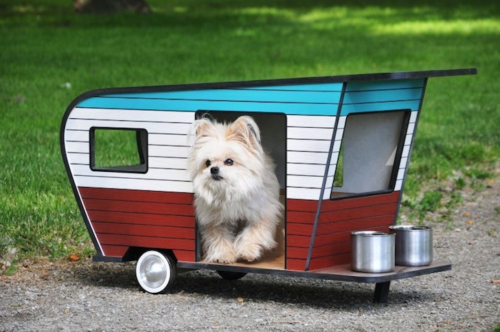 2 Cute doggie camper