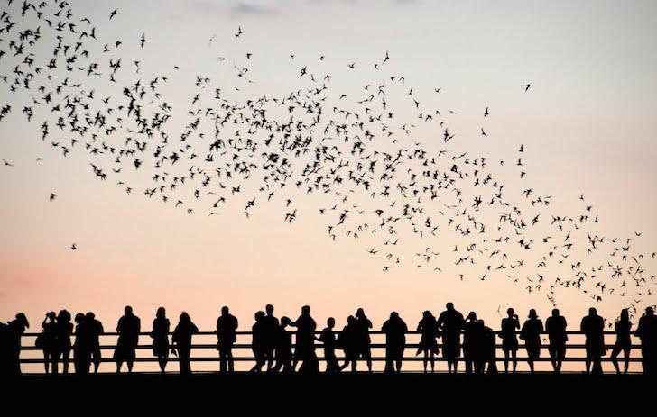 Austin Watch The Cult Bats