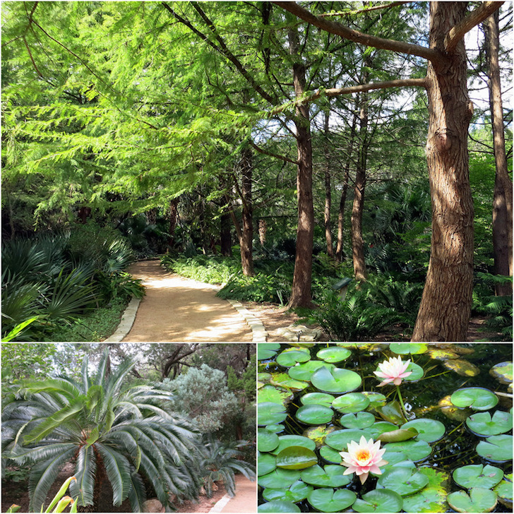 Lush greenery at the Botanical Gardens