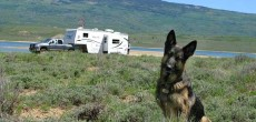 How To Travel With Pets In An RV. Easy Ways to Have Fun RVing With Your Favorite Friend.