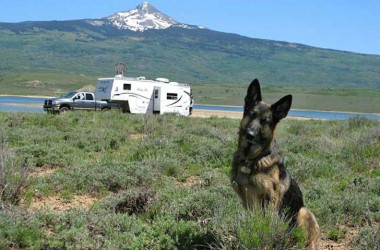Traveling in an RV with a dog