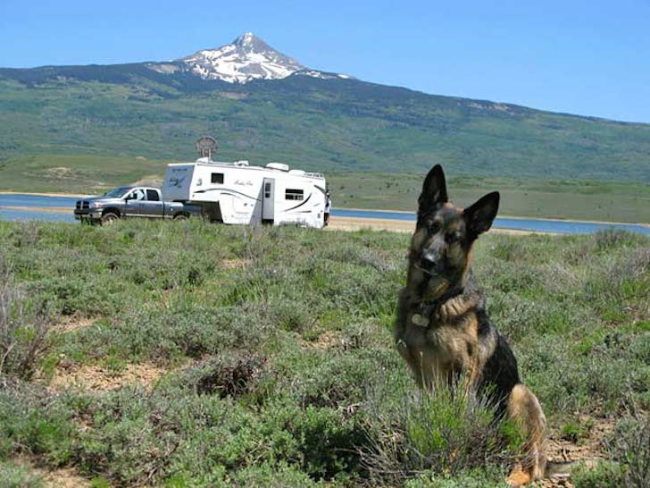 How To Travel With Pets In An Rv These 5 Key Points