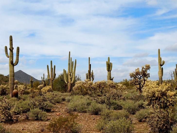 A lush desert landscape