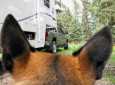 Avoid fleas in the RV