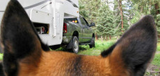 How To Keep Fleas Out Of Your RV And Off Of Your Pet – These 6 Ways