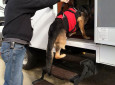 This Harness For RVing Dogs With Mobility Issues Makes Hopping Into Vehicles Easier