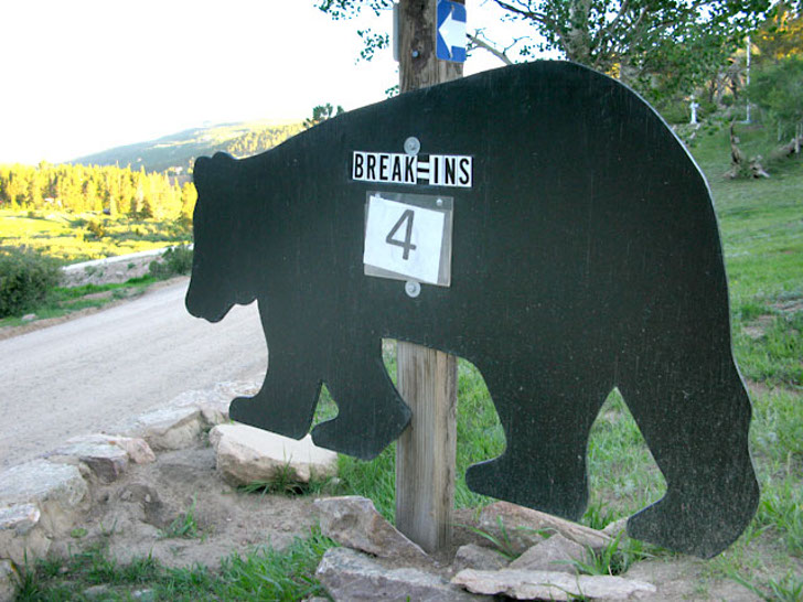RVing in bear country