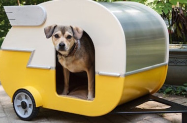Cute dog in camper