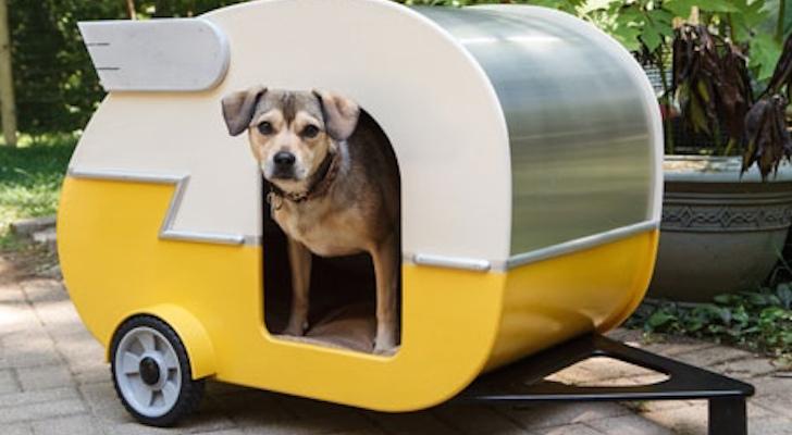Cute dog in camper