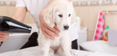 Keeping a dog well groomed can make RV travel more enjoyable for everyone