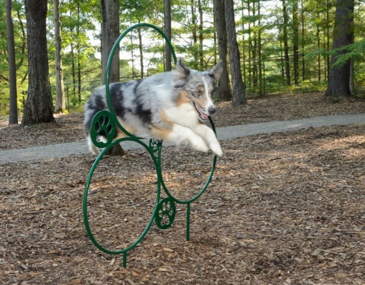 RV Dog Park has agility equipment for dogs