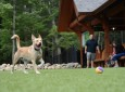 Could This Be The World's Best RV Park For Dogs And Their Owners?