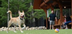 A dog plays at the bark park at the Lake George RV park