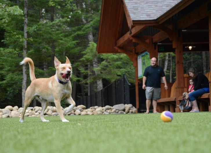 A dog plays at the bark park at the Lake George RV park