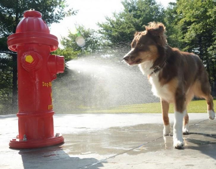 Dog enjoys splash pad at RV dog park