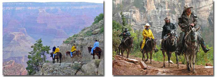 mule trip grand canyon