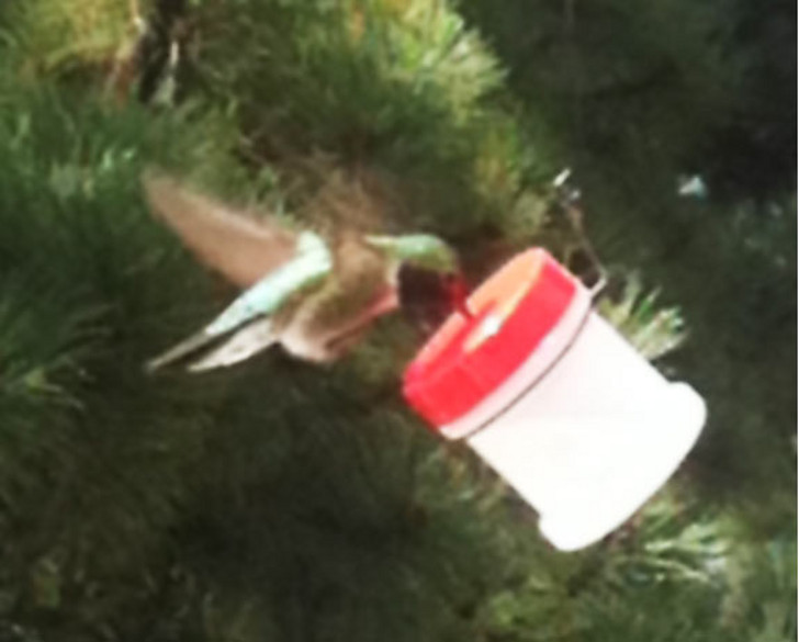 Homemade RV Hummingbird Feeder