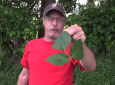 How To Never Get An Annoying Rash From Poison Ivy Again