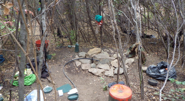 camping near illegal marijuana grow