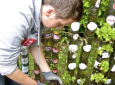 He Makes A Bottle Tower Garden That Could Let Park Modelers Grow Plants In Tight Spaces [VIDEO]