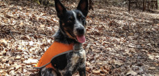 7 Accessories For Dogs That Go Camping