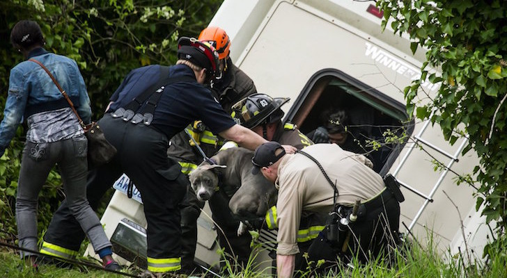 With Their RV Perched Over A Gully, This Poor Dog Was Pulled To Safety