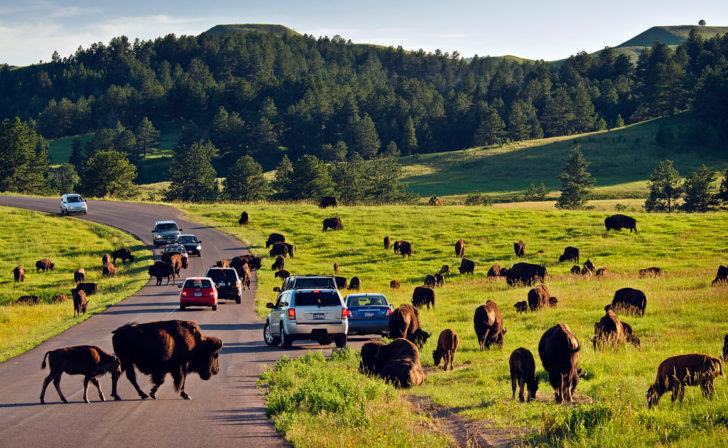 Top 10 Attractions In The Black Hills Besides Mount Rushmore