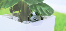 Fascinating Technology Lets Your Plant Charge Your Phone