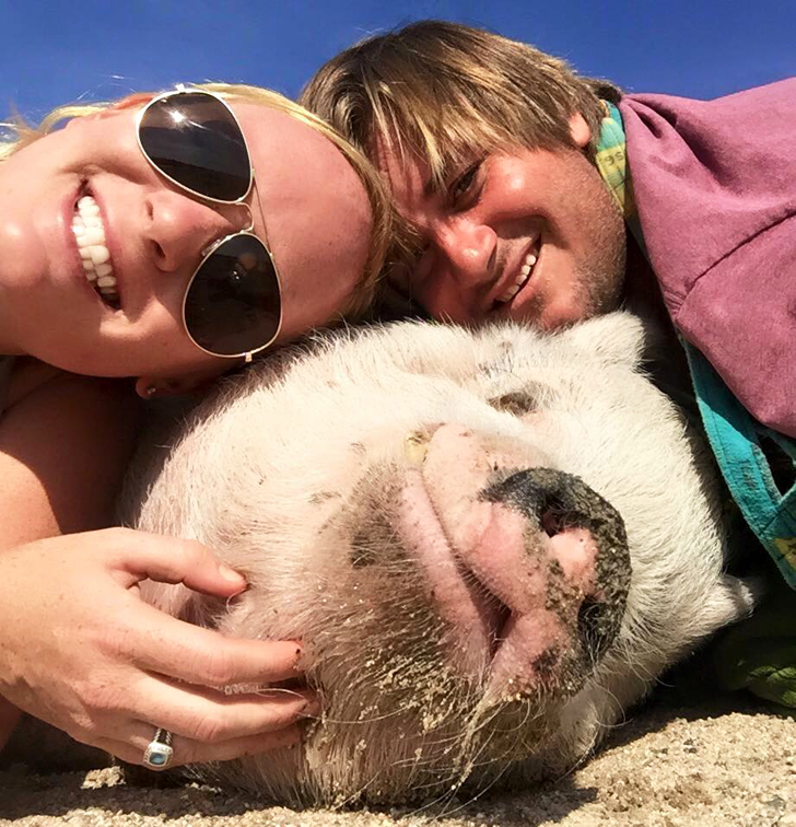 ziggy the traveling pig