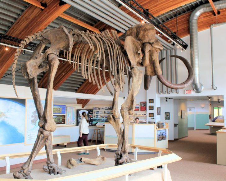 Yukon Beringia Interpretive Centre: 9 Things To Do In Whitehorse, Yukon