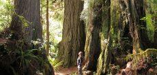 Camp At These 5 Bigfoot, UFO and Mothman Hotspots