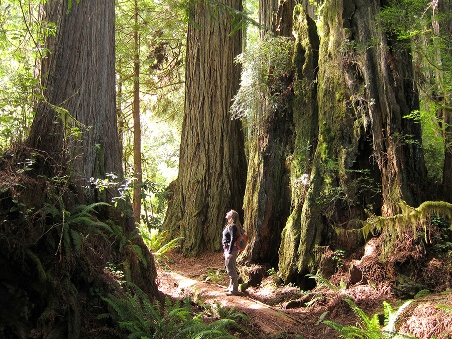 california-redwoods-bigfoot