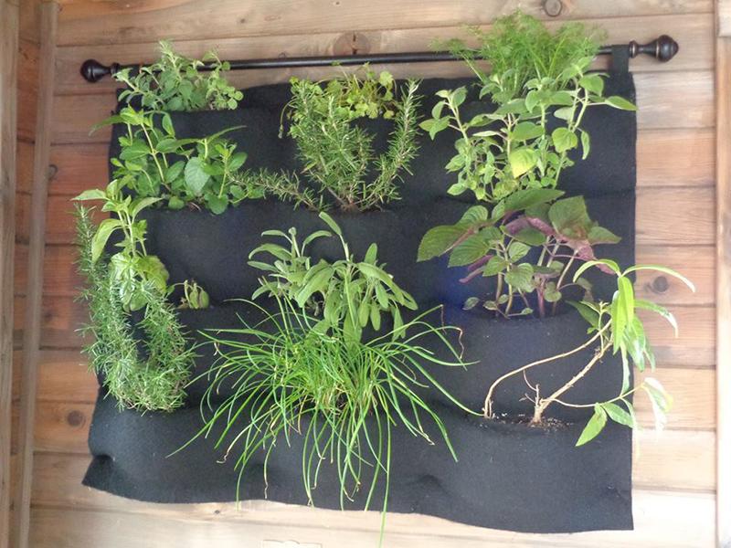 chinarose-wellnesswagon-herbs