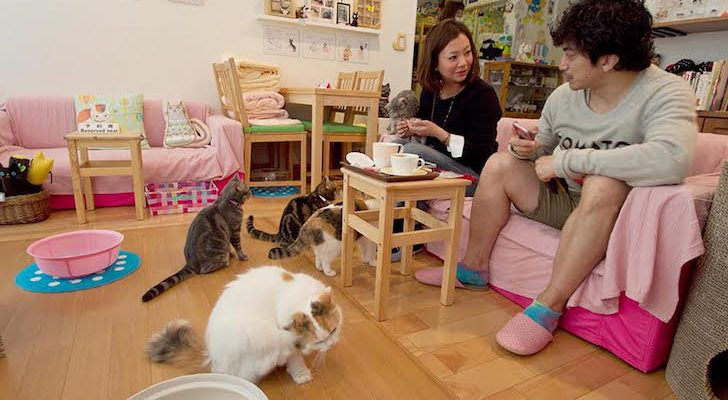 Cat Cafes: Never Be Lonely On The Road Again