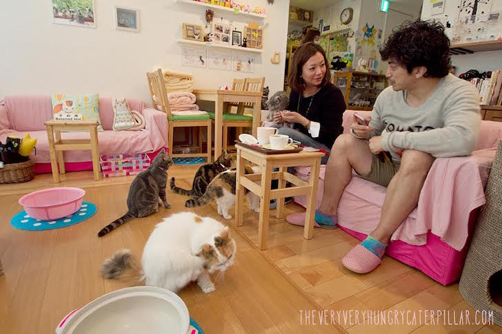 Cat Cafes Never Be Lonely On The Road Again