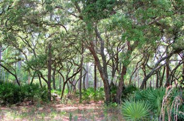 3 Florida State Forests That Offer Fantastic RV Camping