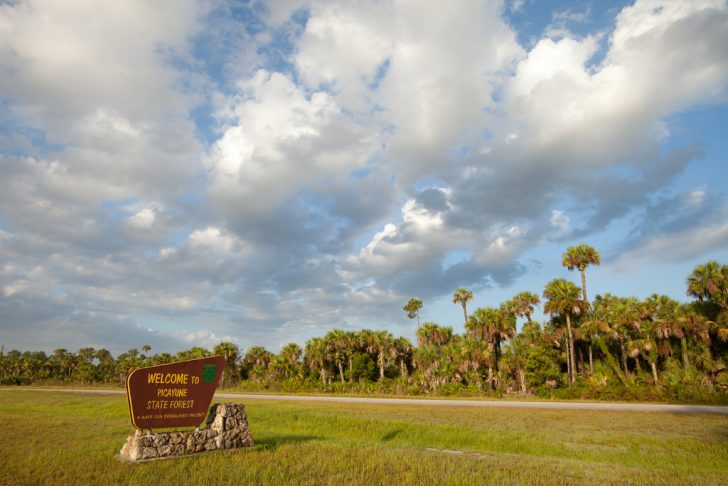 Florida State Forests