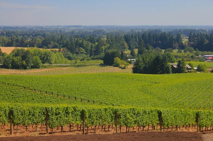 wine regions road trip