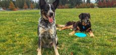 RVing With Pets: Tips For Visiting The Vet On The Road