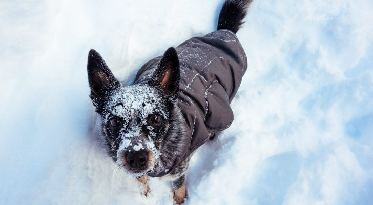 Keep Your Four-Legged Friends Warm With These Essential Items
