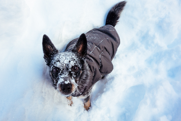 winter dog gear