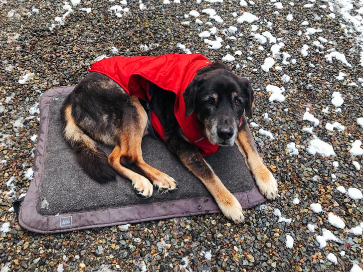 winter dog gear