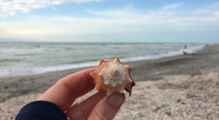 Shelling, Biking & Beaches: Camping On Sanibel Island