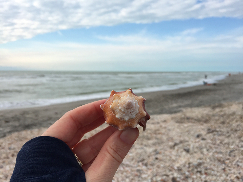 Shelling And Rv Camping On Sanibel Island Florida