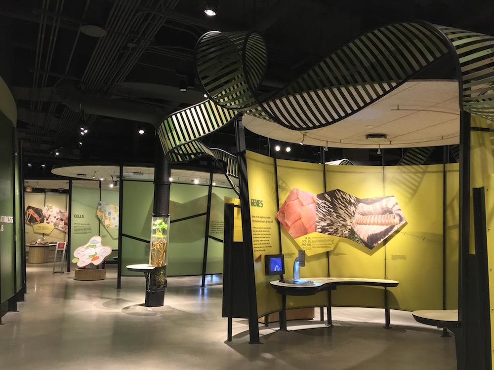 Life Exhibit Natural History Museum of Utah