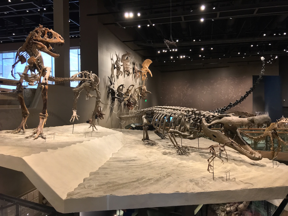 Past Worlds Exhibit - Natural History Museum of Utah